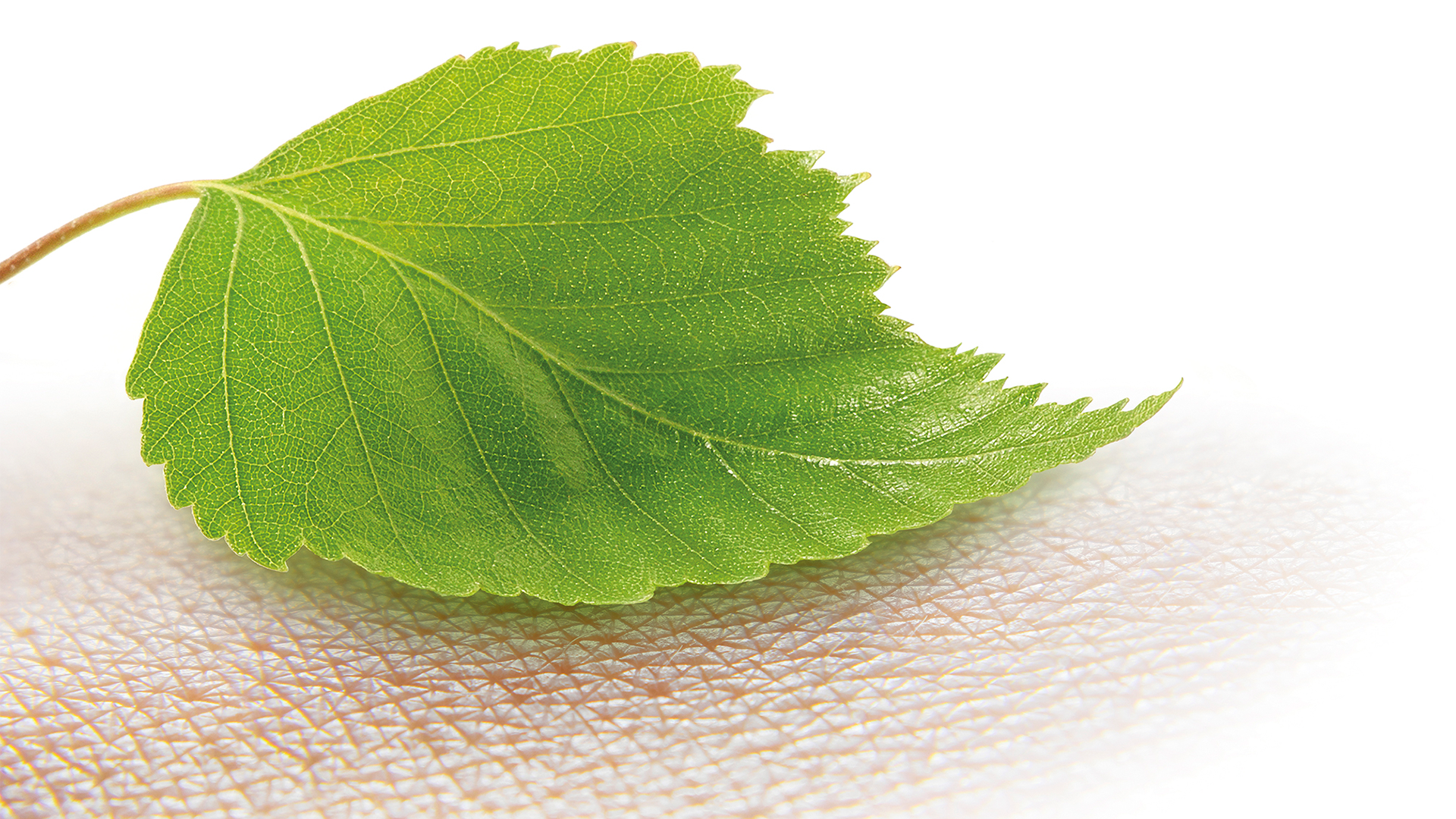Natural healing: UPM's FibDex® replaces synthetic materials in wound dressing with wood-based nanocellulose
