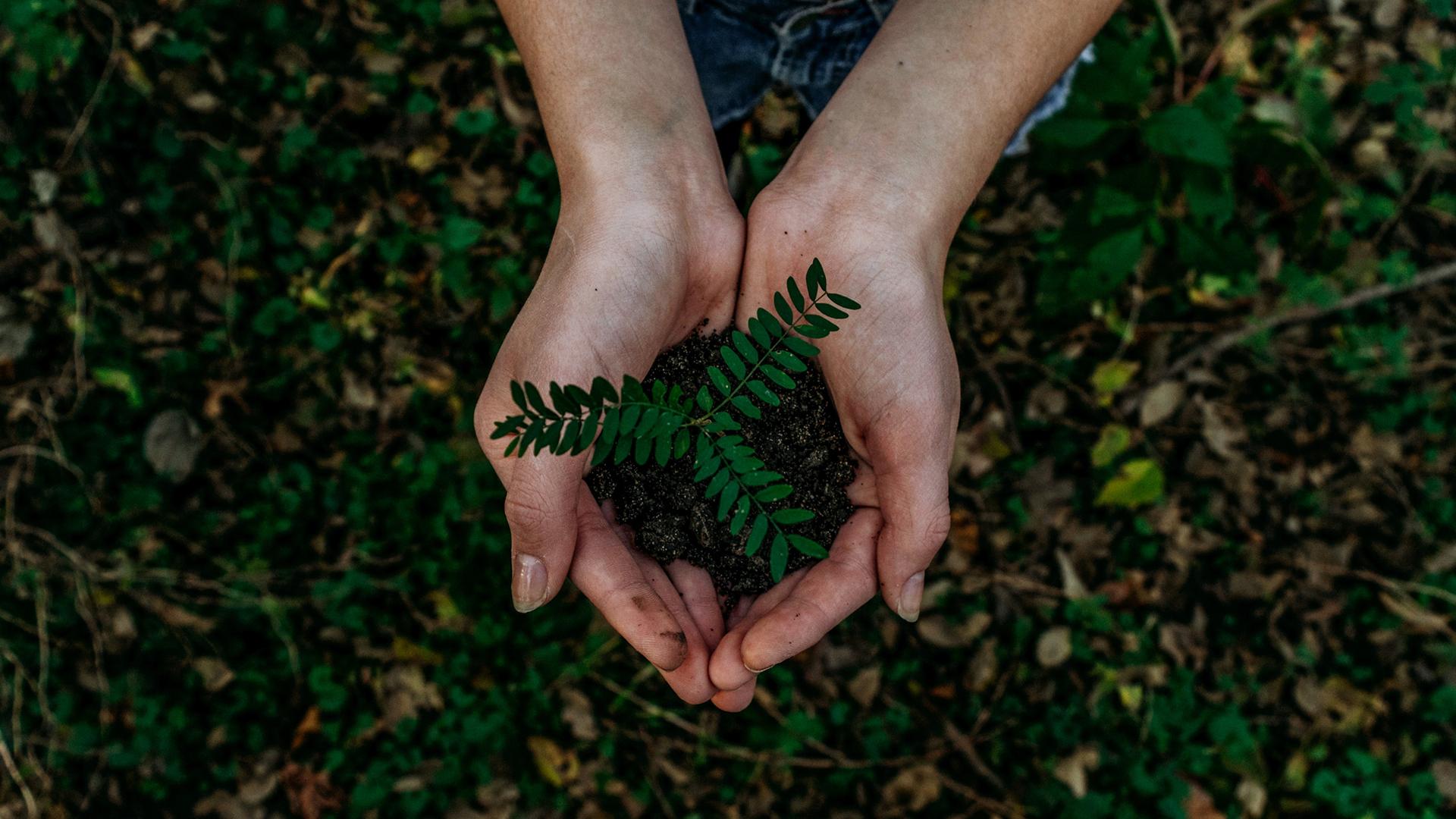Trillion_trees_Planting trees.jpg
