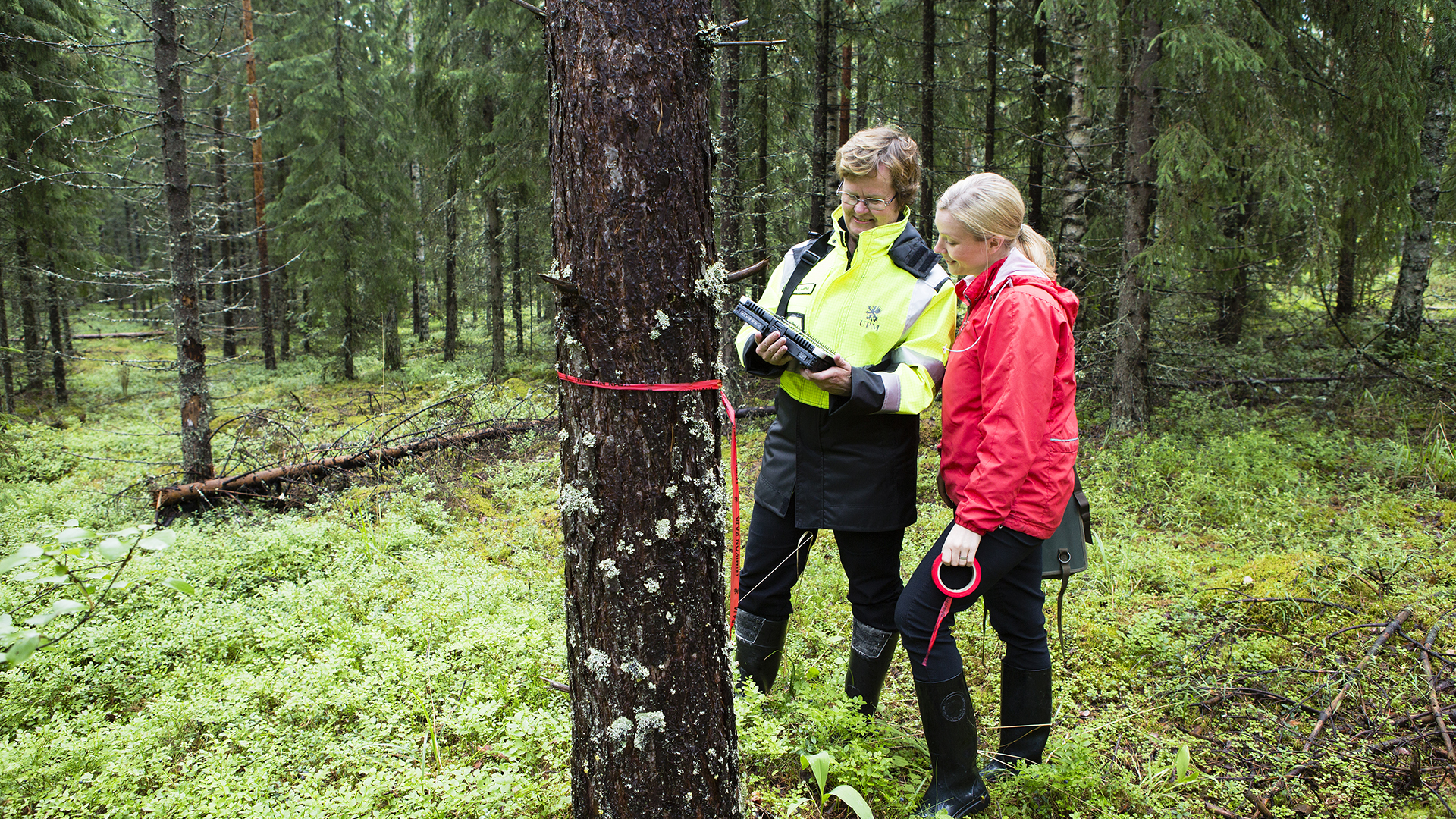 Biologiaa, taloutta, tekniikkaa – metsäalan ammattilaisen monet taidot