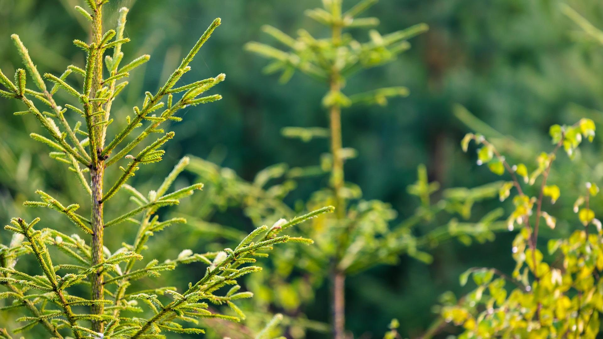 Uudistuva metsäteollisuus luo työtä ja hyvinvointia Suomeen