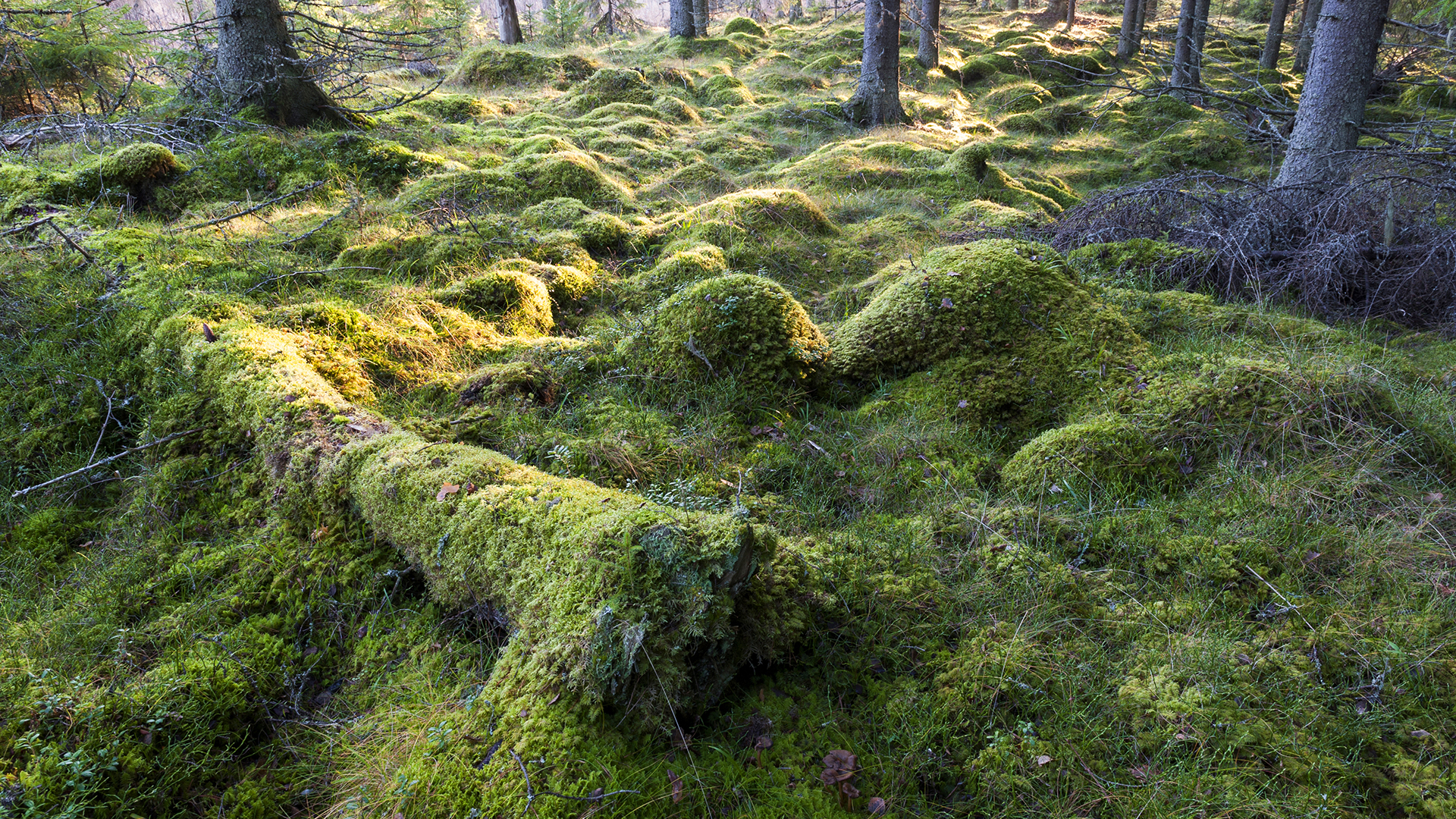 Luonnon monimuotoisuus luo pohjan kestävälle metsätaloudelle
