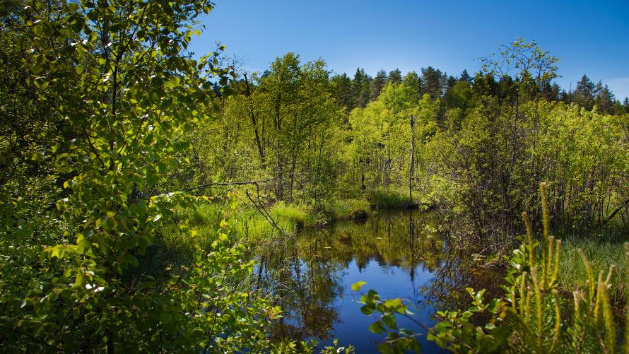 Биоразнообразие создает базу для устойчивого лесопользования