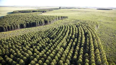 TFD discusses: Intensively managed planted forests