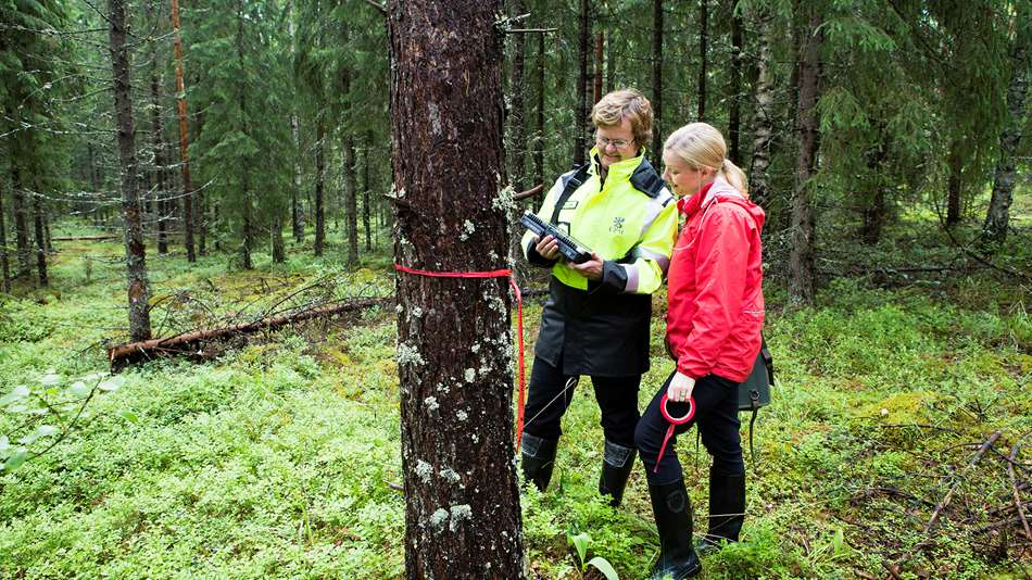 Biology, economy, engineering – a forestry professional has many skills